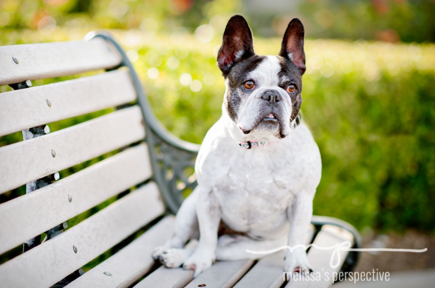 Los Angeles Pet Photographer